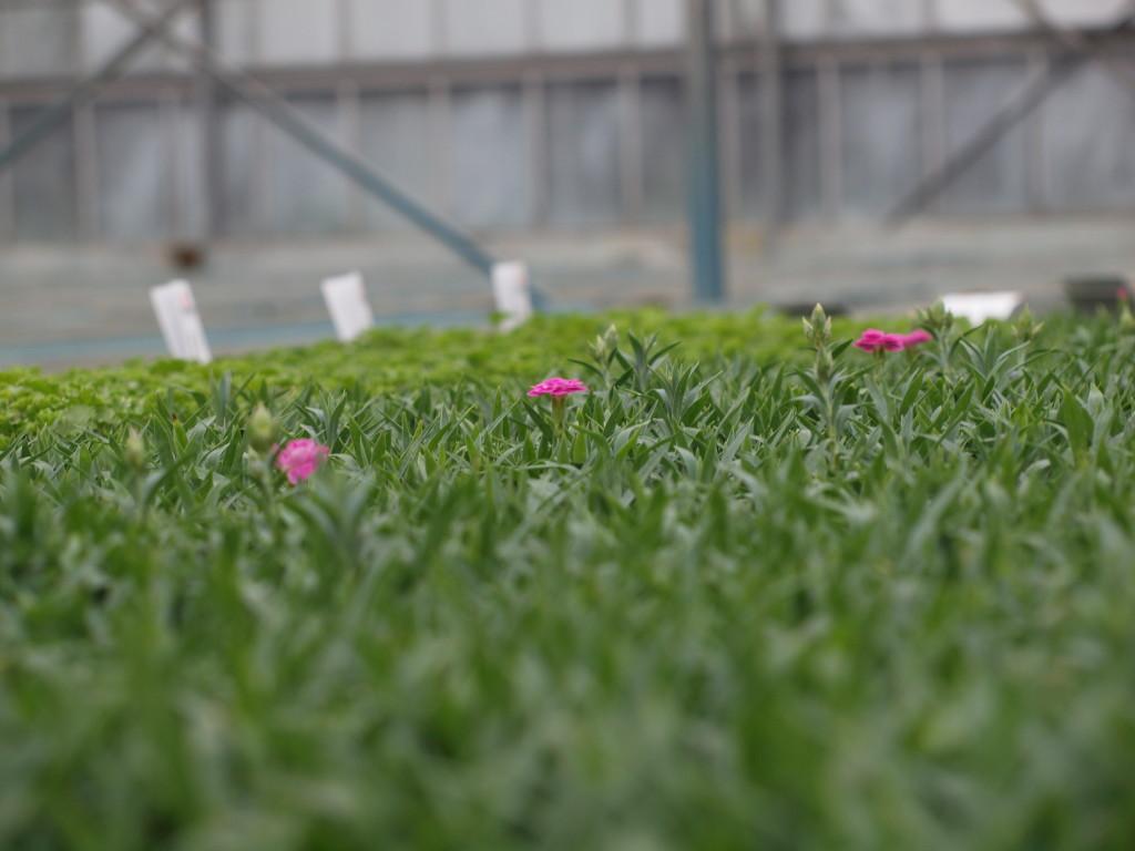La nostra azienda vivai tempesta piante mediterranee for Vivai piante da frutto
